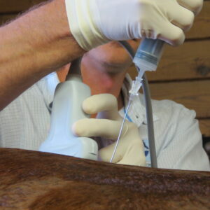 An injection being administered by use of a guided ultrasound. Palm Beach Equine Clinic