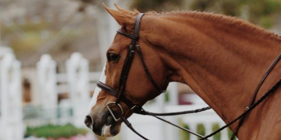 Caring for the Senior Performance Horse