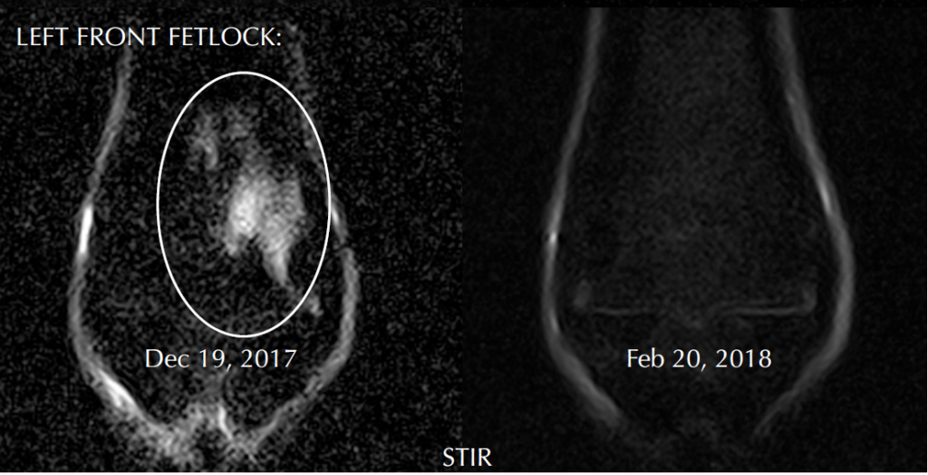 Palm Beach Equine Clinic Regenerative Laser Therapy Case Study: Lameness.
