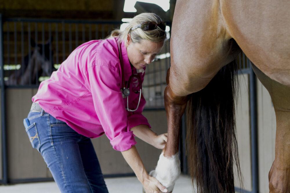 Dr. Kathleen Timmins Palm Beach Equine Clinic