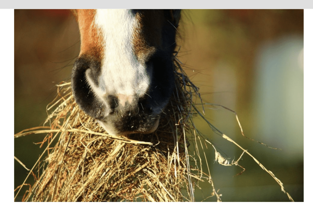 Understanding Energy Support for the Performance Horse Palm Beach Equine Clinic forage first