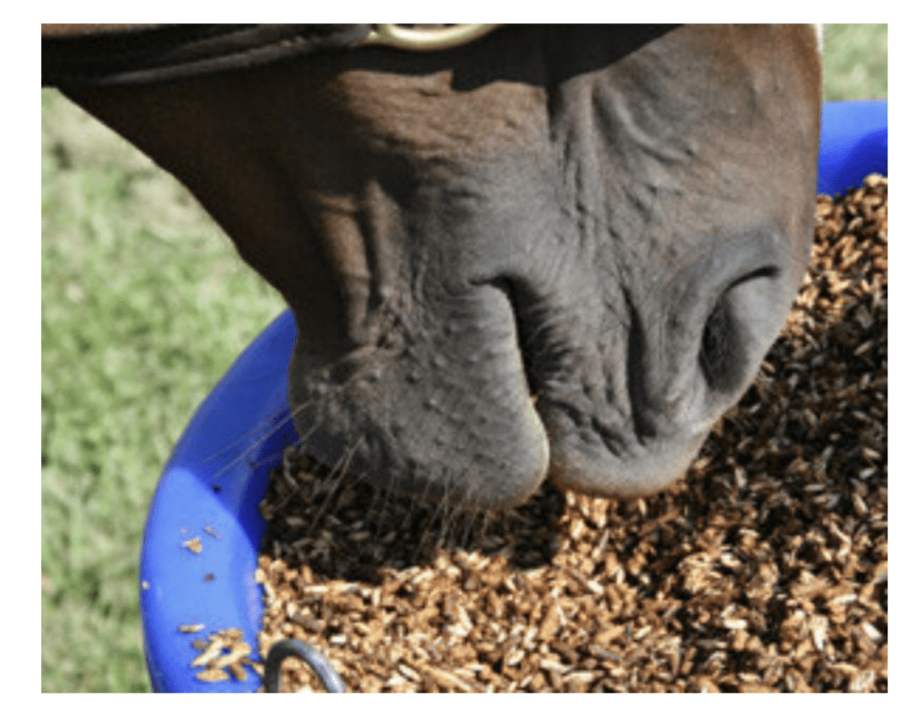 Understanding Energy Support for the Performance Horse Palm Beach Equine Clinic grain