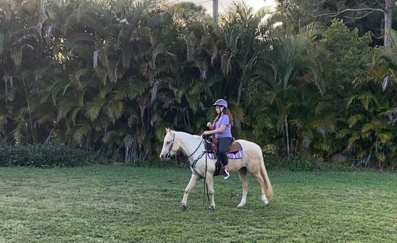 peachy santiago demierre palm beach equine clinic success story
