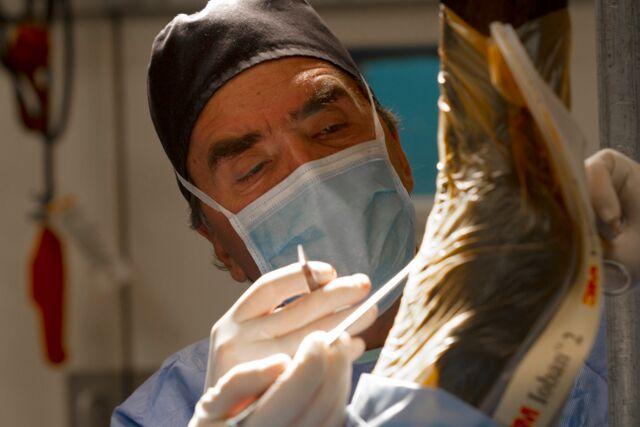 Dr. Jorge Gomez Palm Beach Equine Clinic