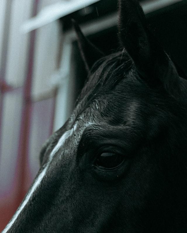 wet horse rain prevent rainrot