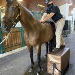 Palm Beach Equine Clinic Veterinarian Dr. Ryan Lukens Veterinary Chiropractic Adjustment Manipulation