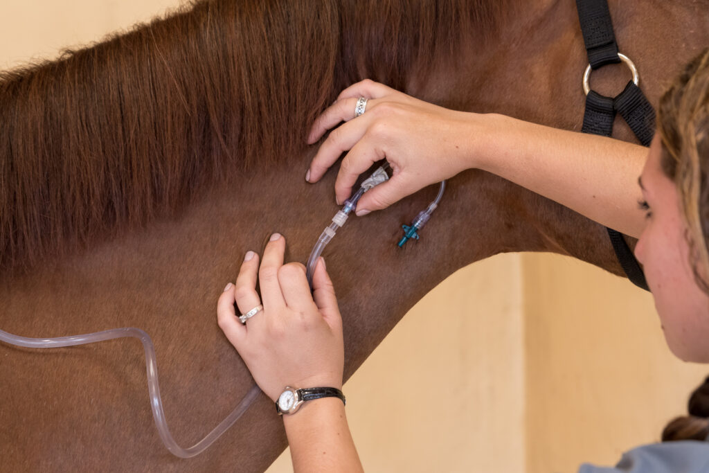 Holly Jacobs Hall Palm Beach Equine CLinic