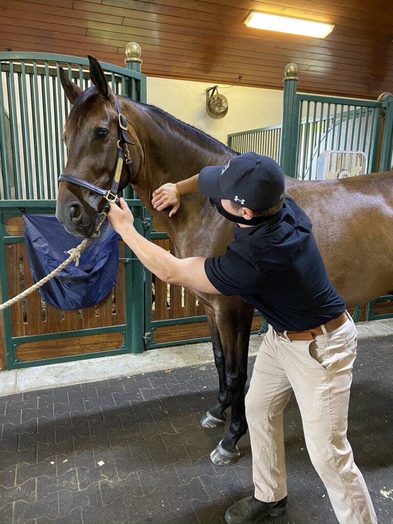 Palm Beach Equine Clinic Veterinarian Dr. Ryan Lukens Veterinary Chiropractic Adjustment Manipulation cervical vertebrae