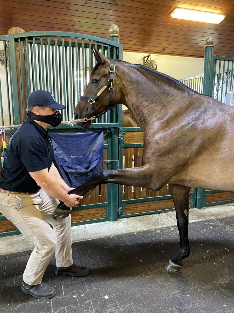 Palm Beach Equine Clinic Veterinarian Dr. Ryan Lukens Veterinary Chiropractic Adjustment Manipulation soulder